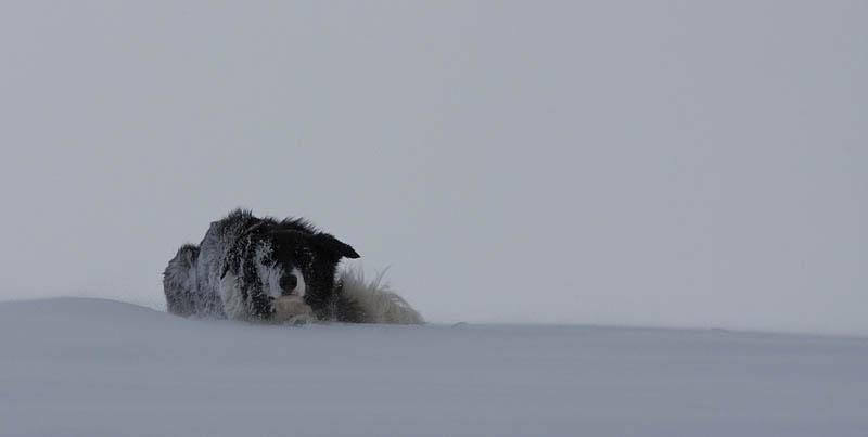 Flippa i snödrev