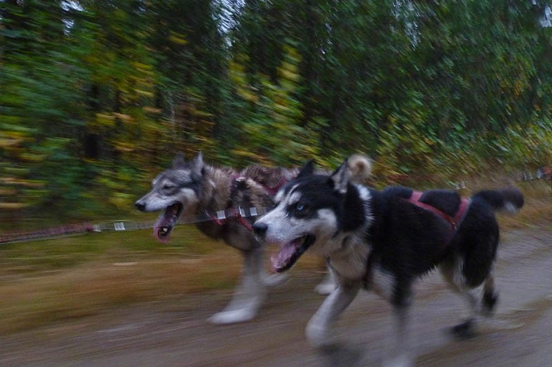 Working Husky Pelle och Working Husky Xuper