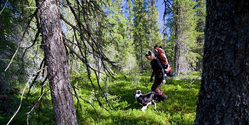 Skogsvandring_tarradalen