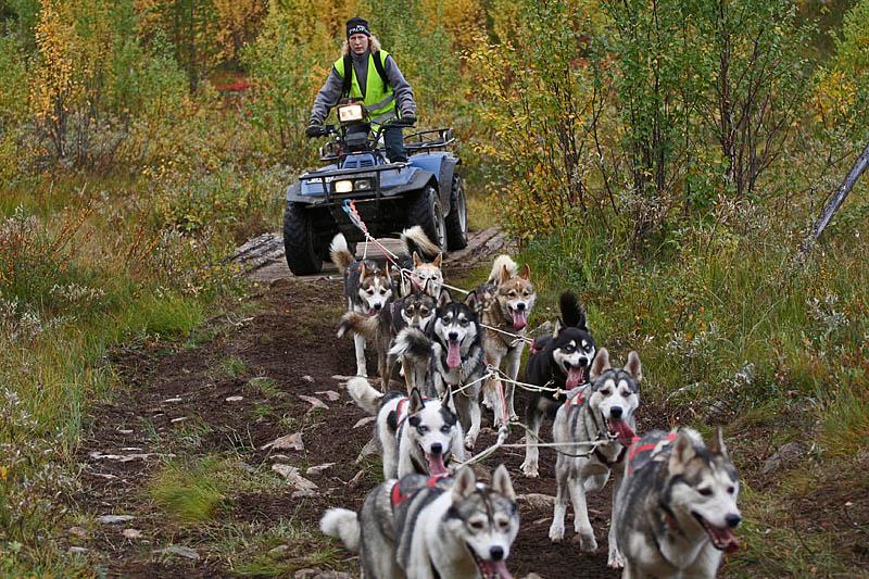 Hundträning_atv