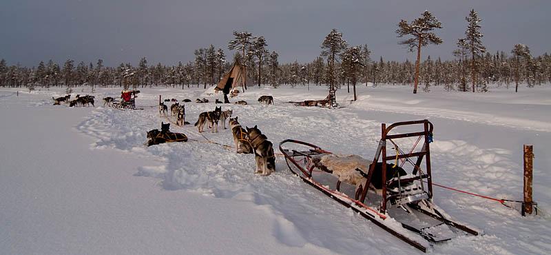 Jokkmokksmarknad-hundspann-kåtan