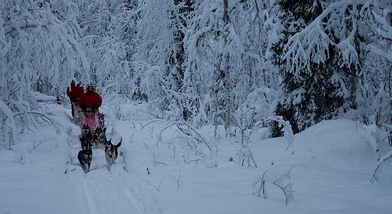Hundspann_snötyngdaskogar