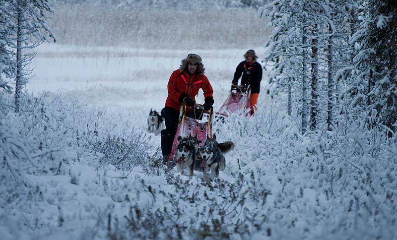 Hundspannskörning_lite_snö