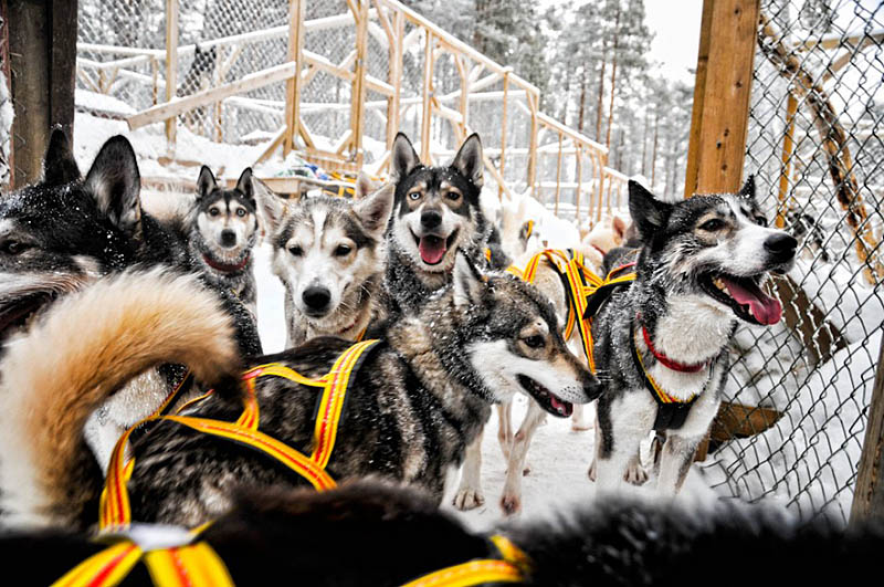 Working_husky_kennel
