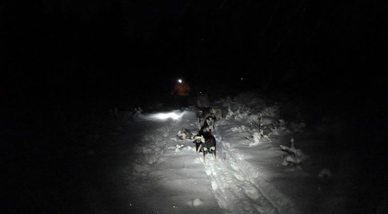 Hundspann_mörkerkörning