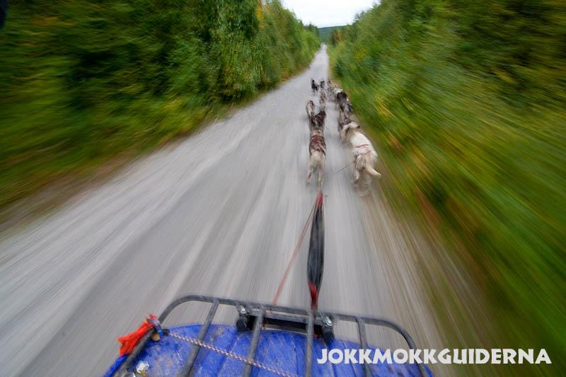 Hundspann_fyrhjuling