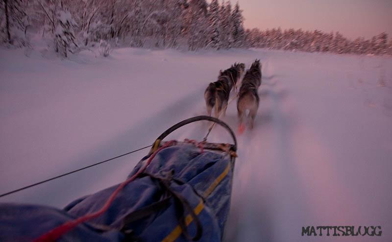 Hundspann_svenska_lappland_5