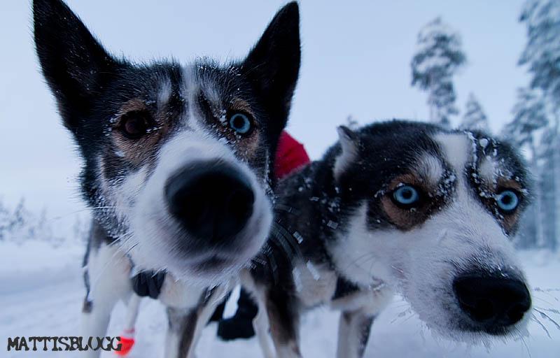 Hundspannstur_skogslandet_2
