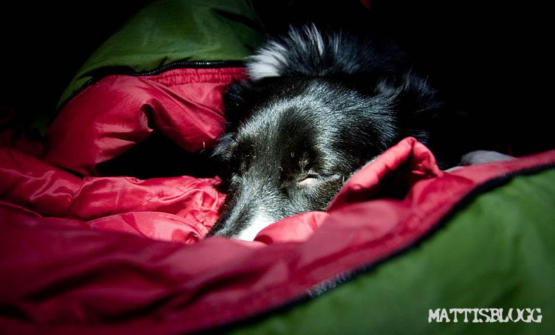 Tredagarstur_hundspann_nyårsafton_1