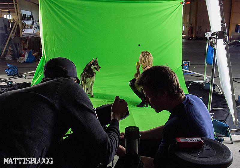 Filminspelning_hundar_1