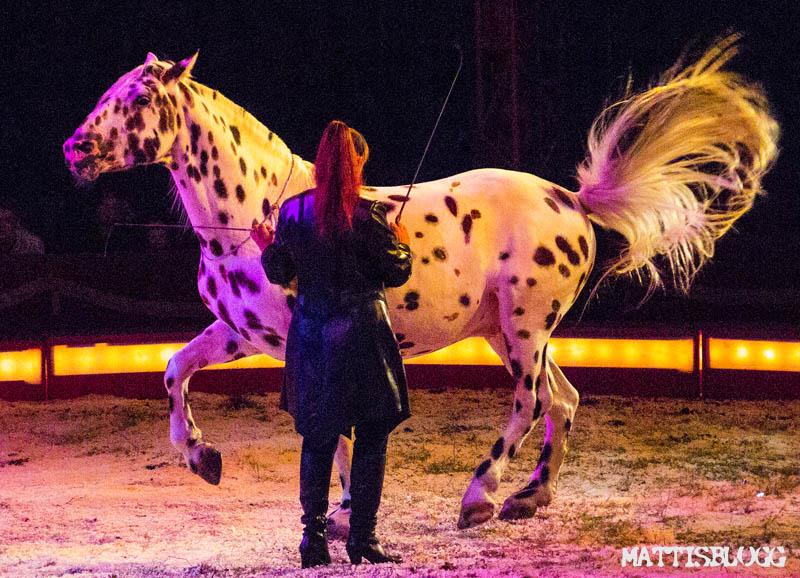 Cirkus_maximum_2