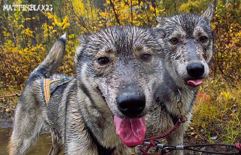 Hundträning_regn_3