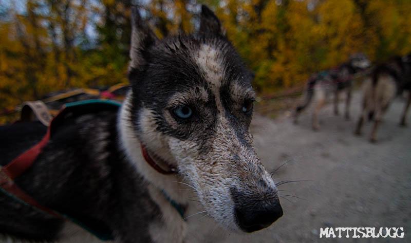 Hundträning_september_4
