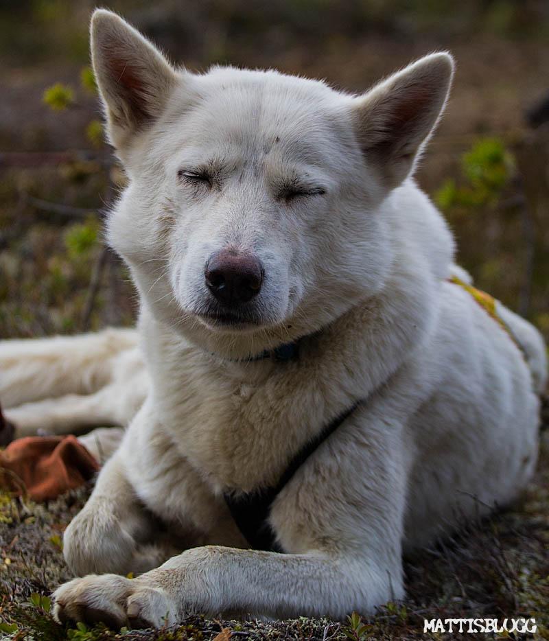 Hundträning_hundspann_3