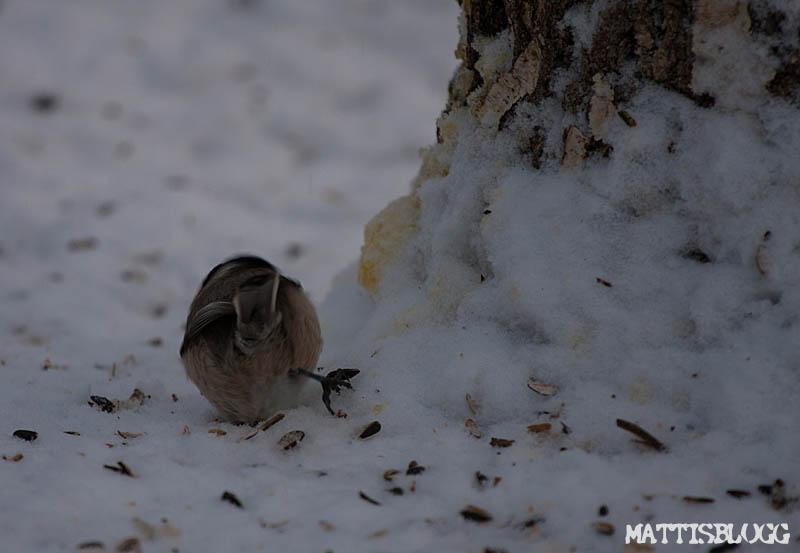 Fåglebordet_1