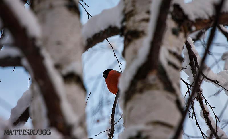 Fåglebordet_3