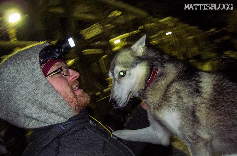 Kvällsträning_hundspann_2