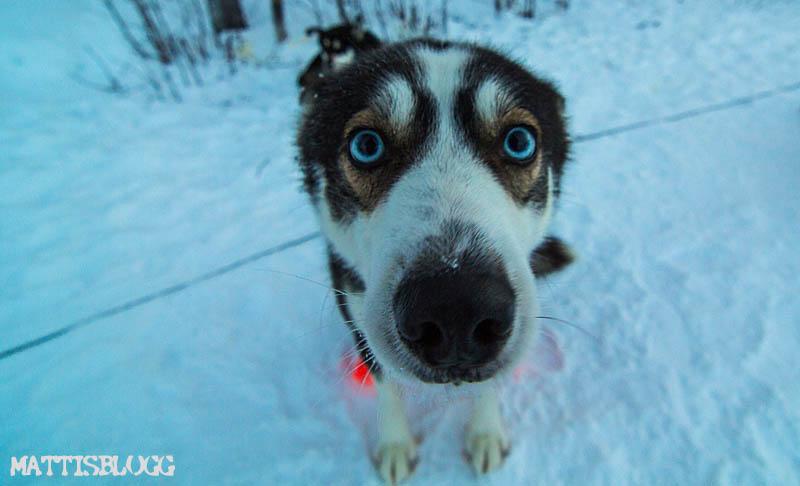 Hundspann_decemberturer_4