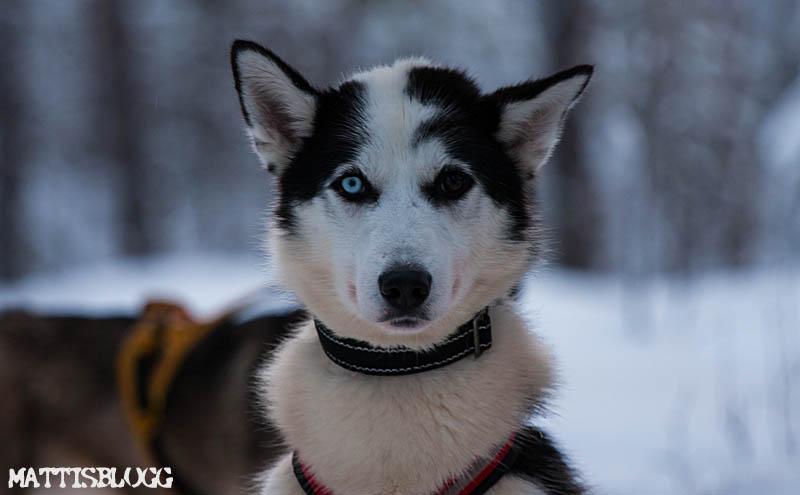 Hundspann_turkörning_2
