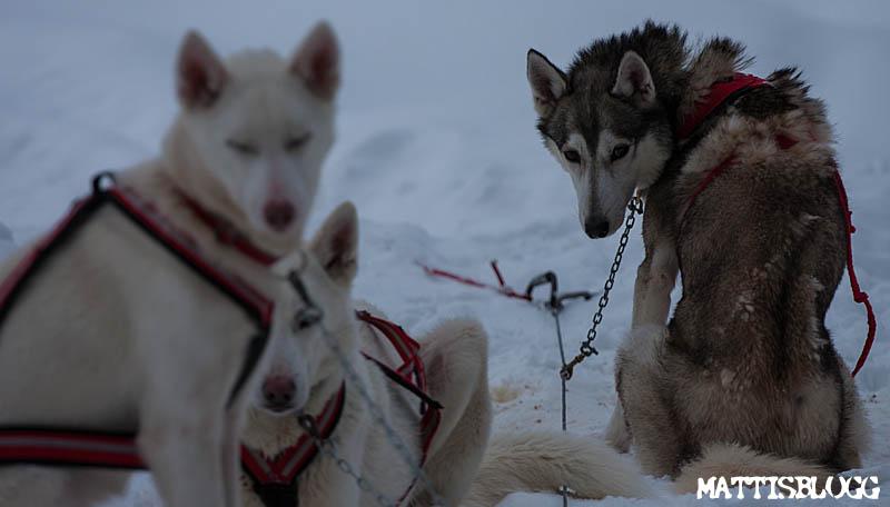 Hundspann_turkörning_5
