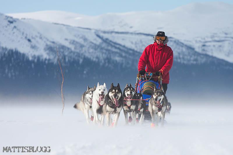 Norskagränsen_hundspann_2