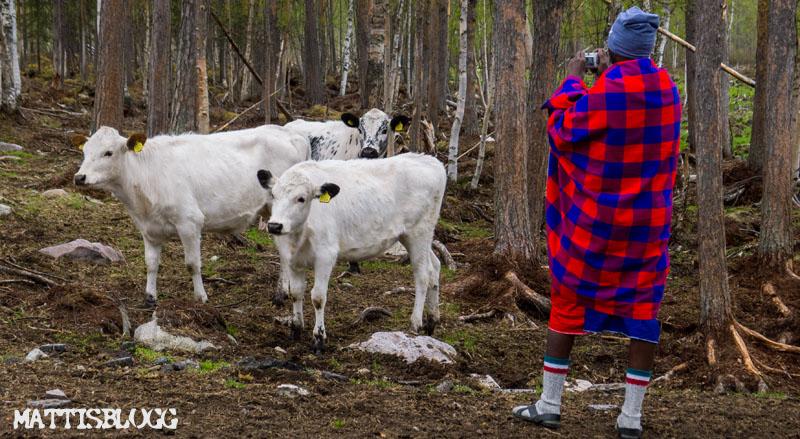 Masajer_kirunaslädhundsklubb_valdag_3