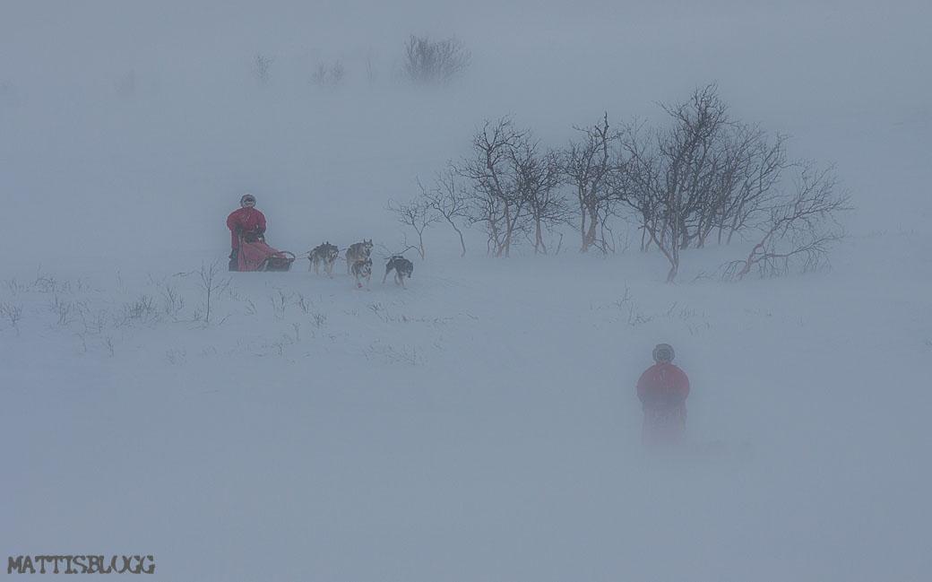 Hundspann_snöstorm