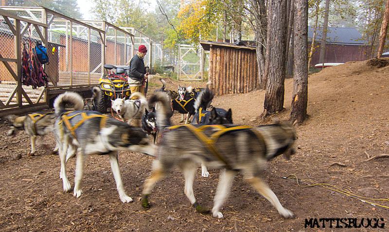 Hundträning_höst_3