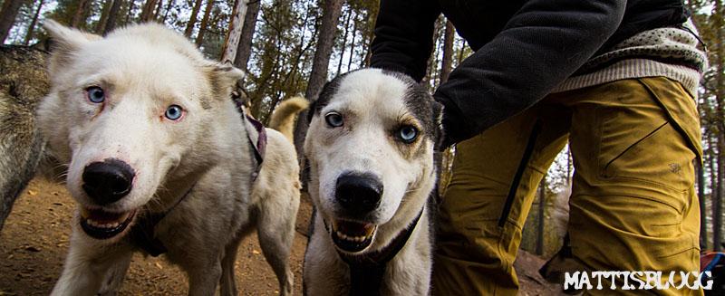 Hundträning_höst_4