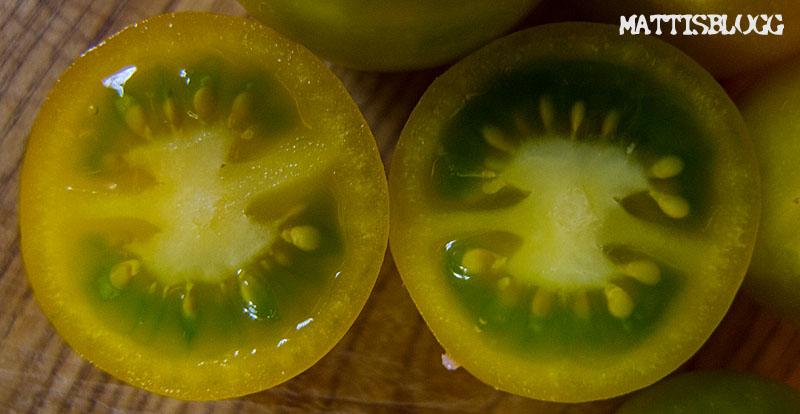 Tomatodling_4