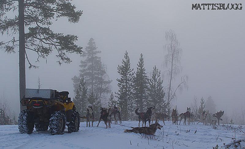 Hundträning_snö_atv_4