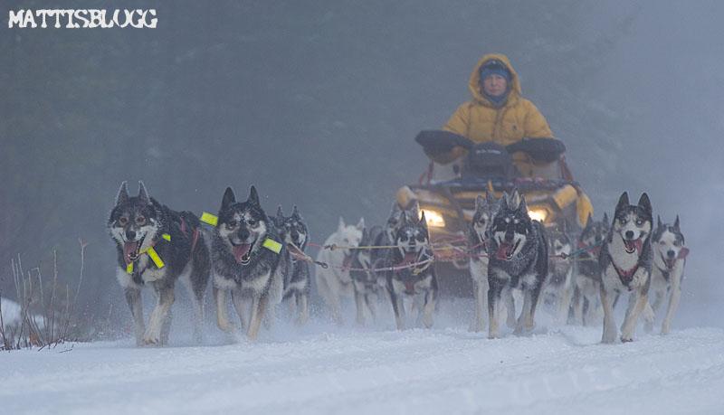 Hundträning_snö_atv_5