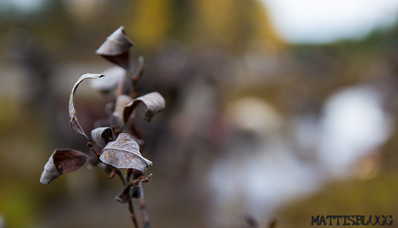 Hösten_som_försvann_3