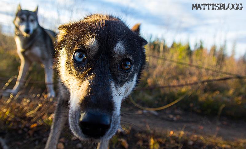 Hundspannsträning_2