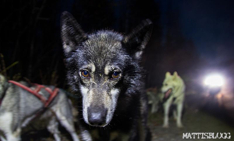 Hundspannsträning_5