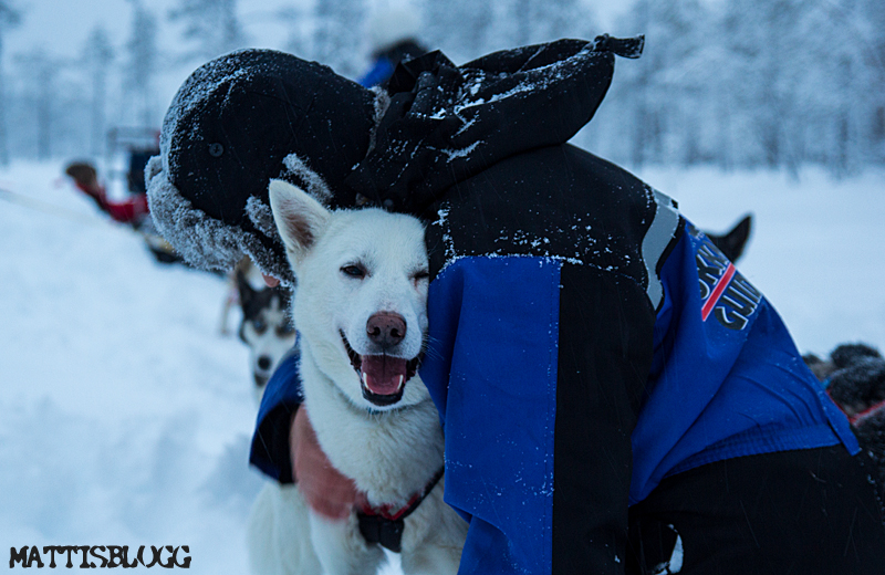 Hundspann_kokkaffe_grillpause_2