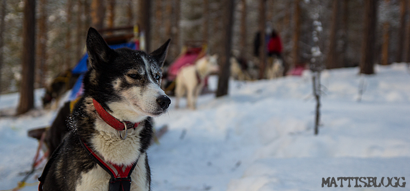 Hundspannstur_kyla_5