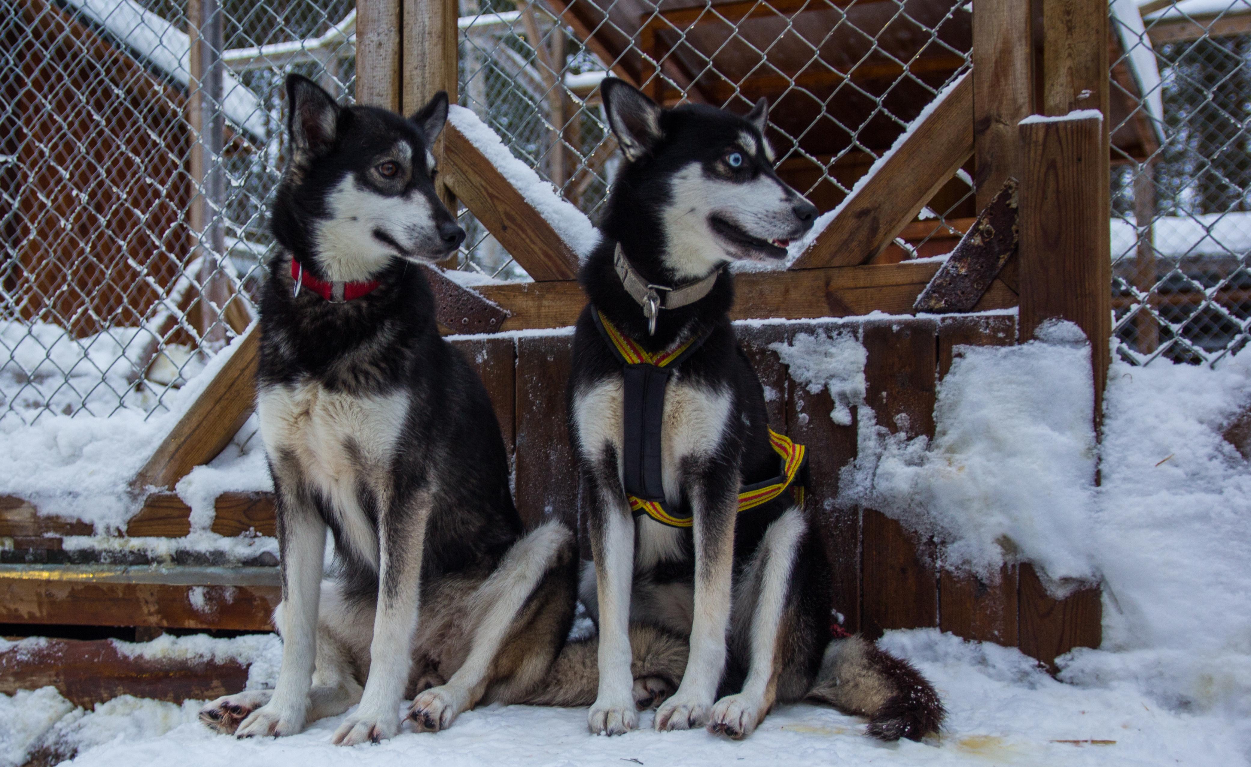 Nyårskänsla_hundspannsjobb_3