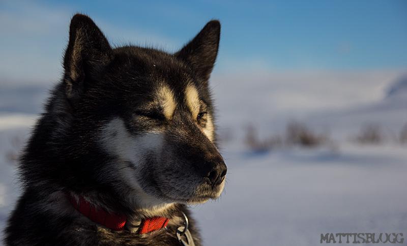 Hundspannskurs_5