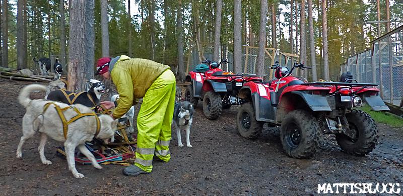 Hundträningen_slädhundar_höst_6