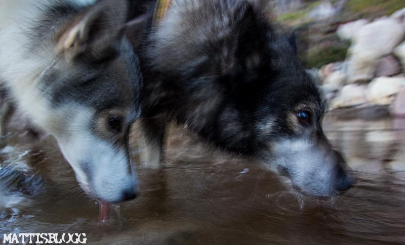 Höstträning_hundspann_3