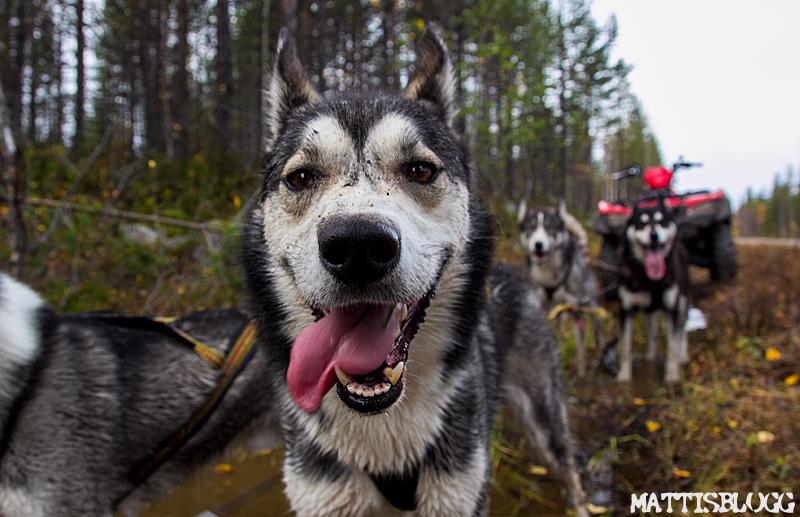 Höstträning_hundspann_5