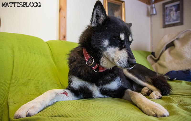 Hundslagsmål-2