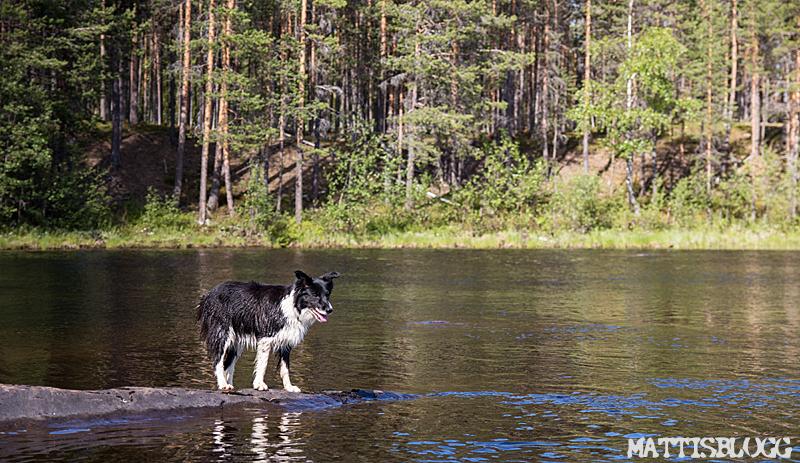 Paddling-norrländsk-skogsälv-1