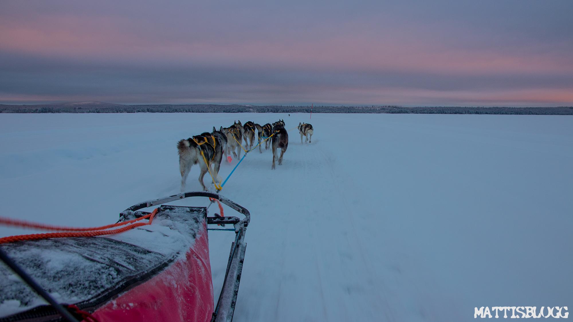 Hundspannstur-swedish-lapland-5