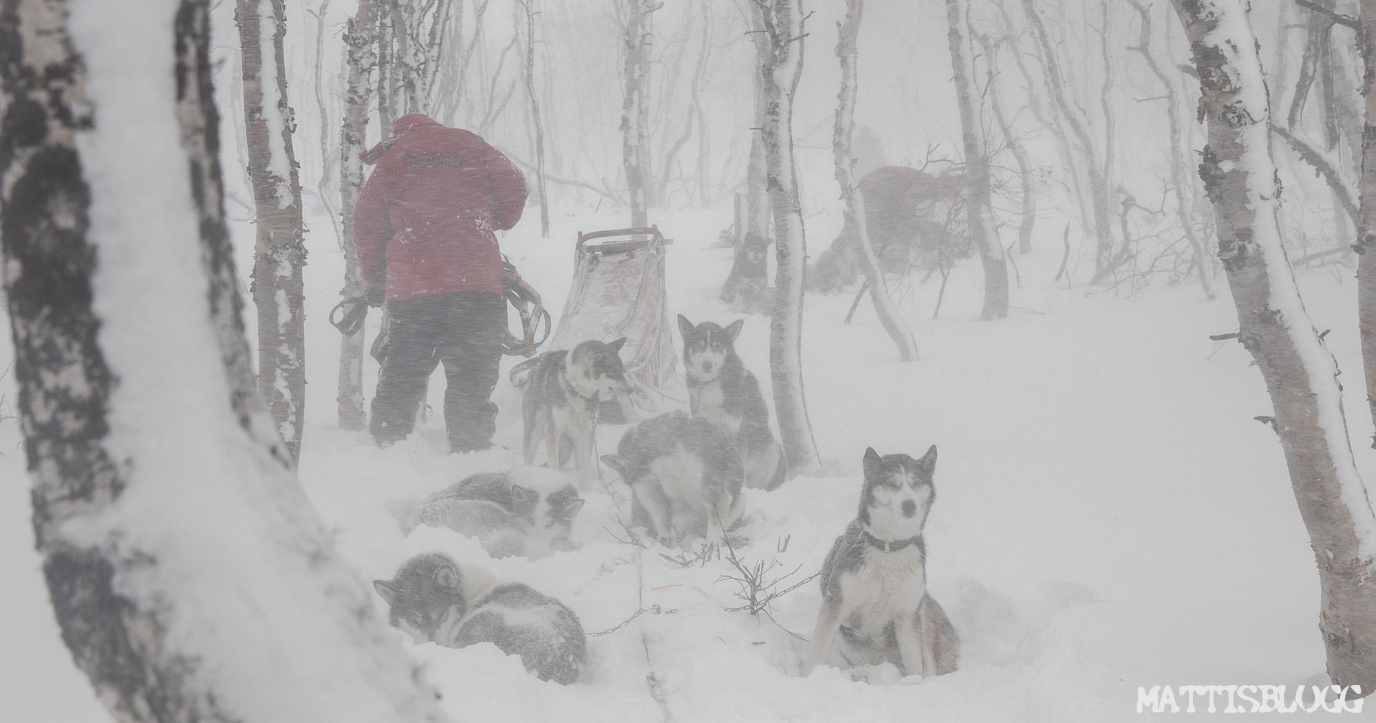 Explore-sarek-hundspann-1