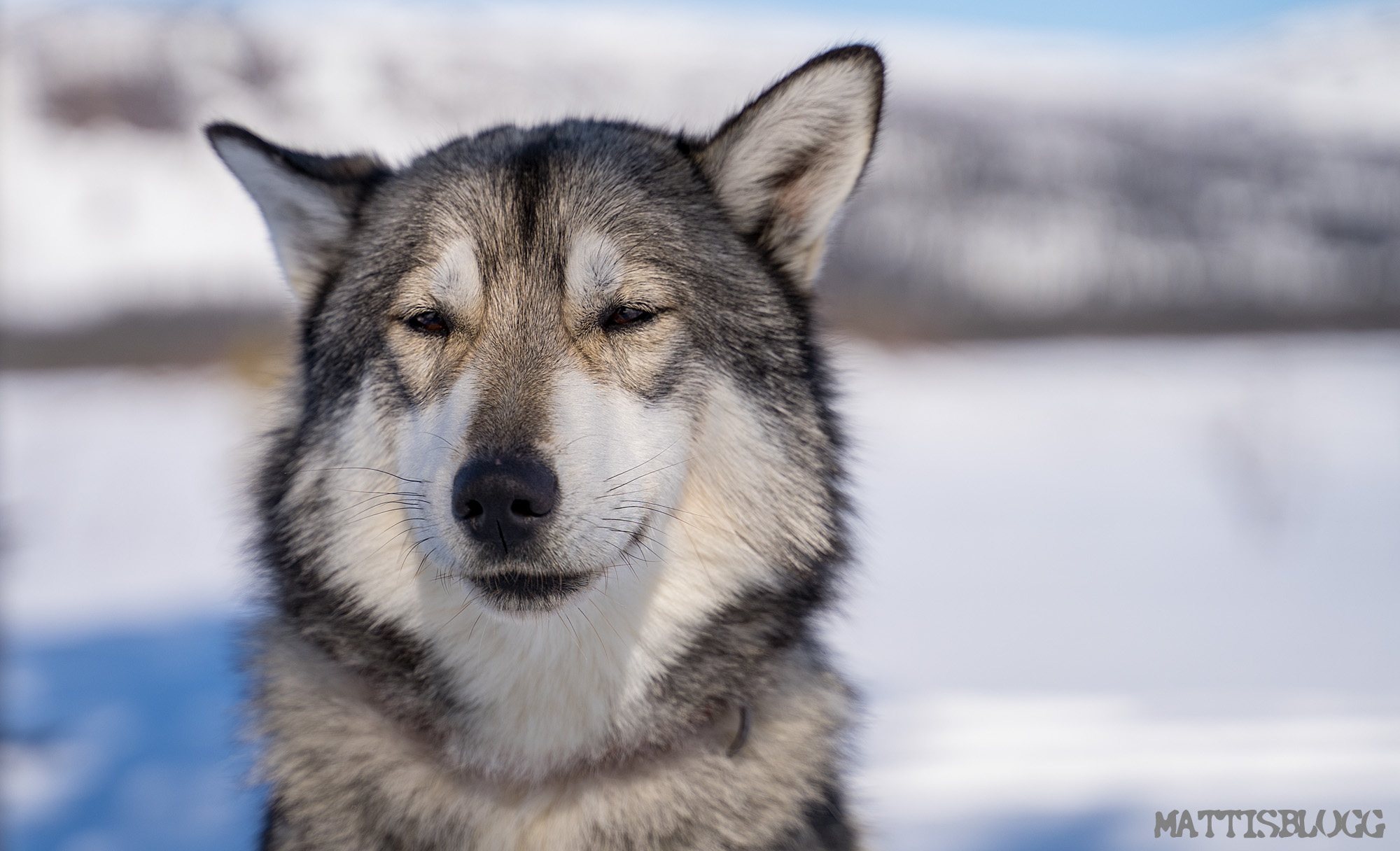Hundspann-sarek-kungsleden-3