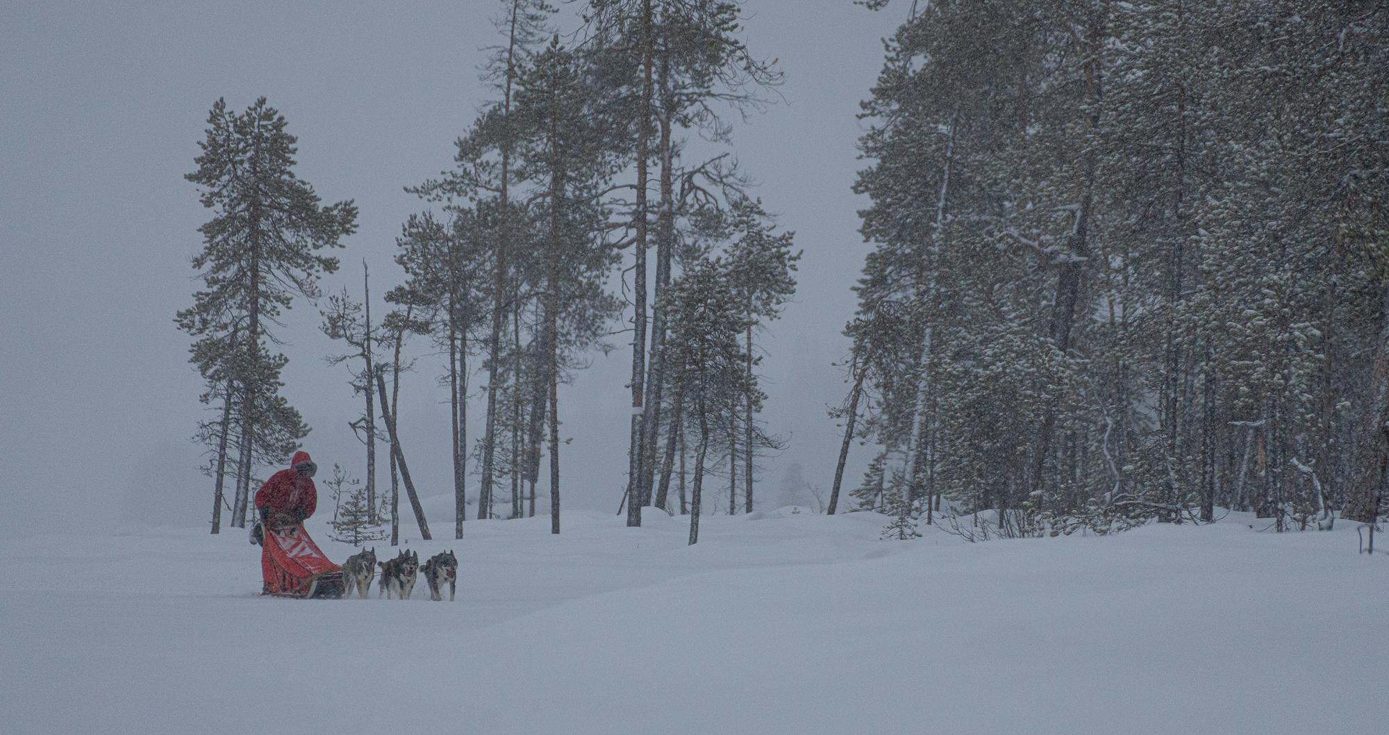 Hundspann i Jokkmokk