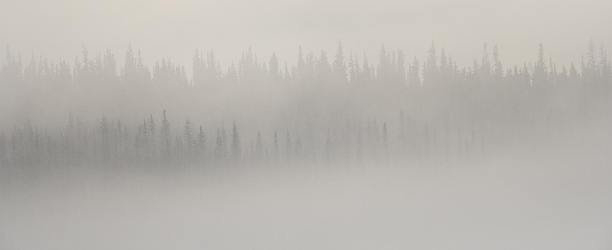 Dimman lättar över taigan.