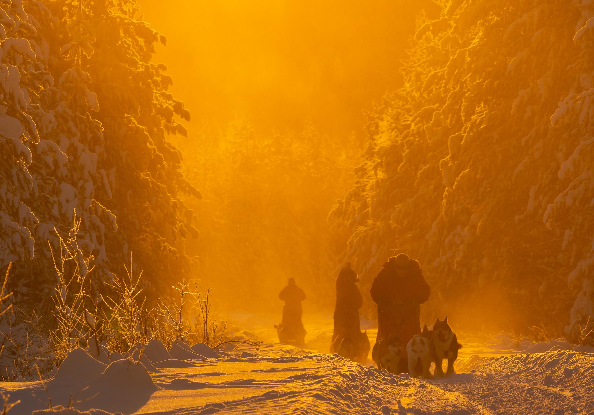 Arktiskt-ljus